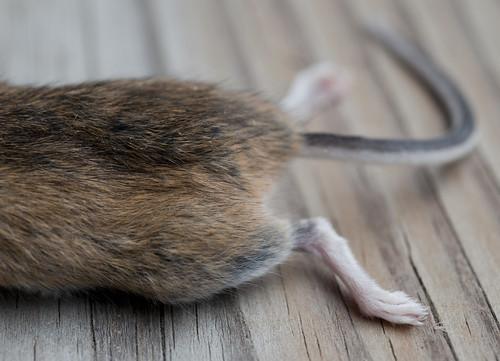 November Mouse