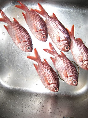 lunch, Tetmanu
