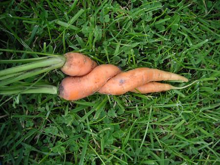 Carrots Sex 42