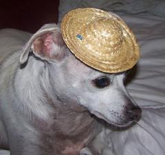 Quasi sombrero