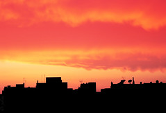 strictly urban silhouette (julioc.) Tags: sunset pordosol red sky urban orange portugal silhouette backlight clouds faro lumix fz20 geometry quality scenic silhouettes nuvens backlit redsky copyspace algarve contrejour dmcfz20 silhuetas julioc supershot cy2 challengeyouwinner mywinners abigfave photographybyjulioctheblog j2549