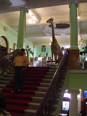 durban natural history museum - foyer3