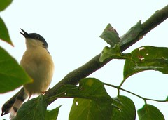 AshyPrinia Singing