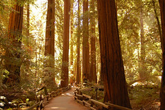 A sense of scale (Pat Ulrich) Tags: california d50 nikond50 muirwoods marincounty redwoods nationalparkservice naturescenes muirwoodsnationalmonument redwoodforest sequoiasempervirens supershot senseofscale coastredwoods diamondclassphotographer flickrdiamond wetlanddoc verysmallpeopleverylargetrees bestnaturetnc07 patulrich