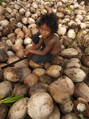 Boy in the middle of a coconuts' sea, Efate, Vanuatu (Eric Lafforgue) Tags: island bed pacific ile tribal hasselblad blackpeople tribe ethnic coconuts hebrides ethnology vanuatu tribu oceania ebridi melanesia pacifique newhebrides ethnologie efate h3d oceanie ethnique lafforgue ethnie ericlafforgue melanesie nouvelleshebrides ericlafforguecom wwwericlafforguecom vanuatupicture vanuatupictures  wanuatuneue hebridennew hebridesnieuwe hebridennouvelleshbridesnuevas hbridasnuove
