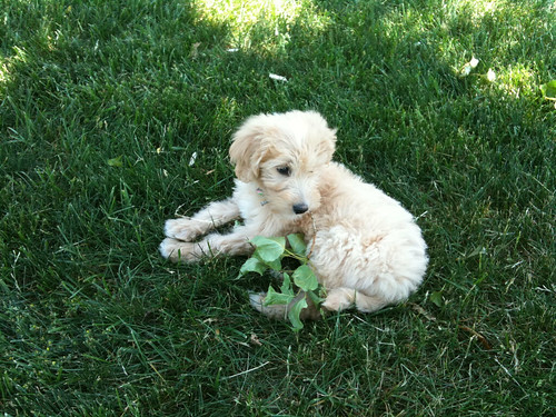 Tula the puppy | May 2010