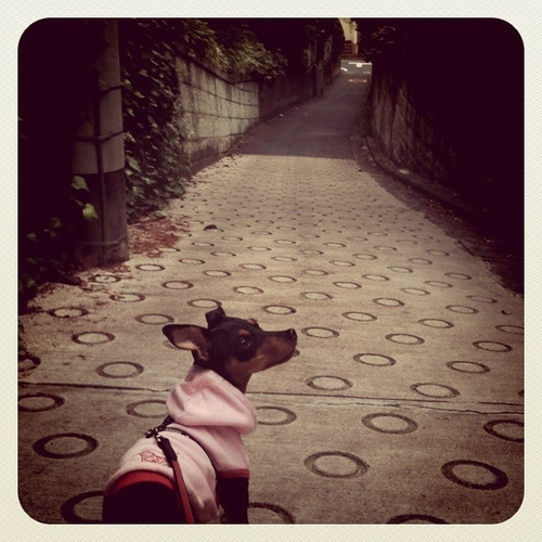 坂道を歩く黒犬