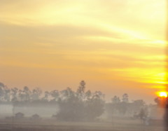 '..tomar nam janiney, sur jani..' ~misty morning~ [explored] (sajan164) Tags: ahir raga chakraborty bairab banglagan mistymoring sajan164 chittagongteknaf ajaoy