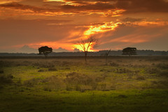 The dutch serengeti (Mighty Maik) Tags: holland landscape zonsondergang thenetherlands zon landschap keizer maik zonlicht