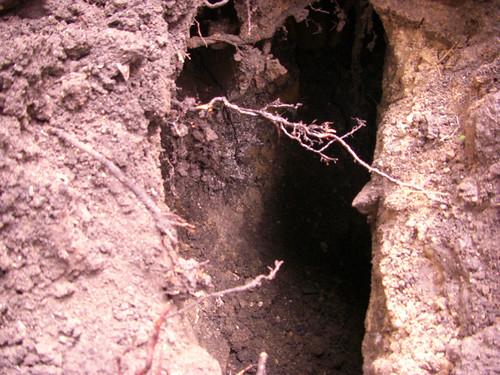 Un grotte sous la terrasse