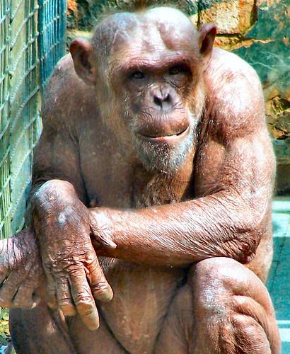 Monkey Hair Growth Committee 577393093_dfcb943e3d