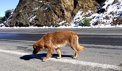 Lost I (Jorgelixious) Tags: dog snow ice fuji nieve finepix perros s5600