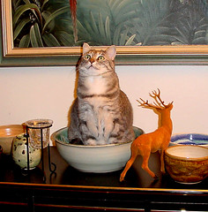 S'mores, Still Life With Cat (Fractal Artist) Tags: stilllife cute cat kitty smores kissablekat bestofcats