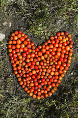 Berry-heart (JRT Pickle) Tags: red berry heart ephemeral landart naturalart birkbank rownberries