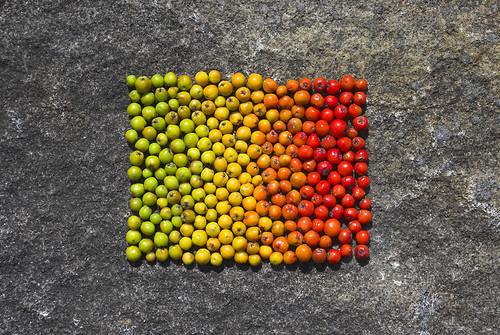 Rowan Berries - Richard Shilling - Escher