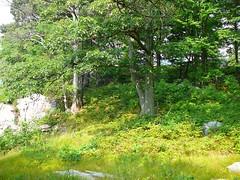 P1030578.jpg (airwaves1) Tags: 1000islands stlawrenceriver july282007 yeoisland
