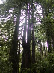 Odd Tree