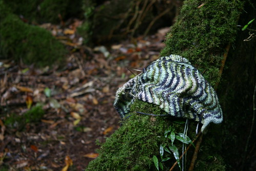 Chevron scarf in the rainforest
