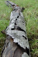 dead branch 2