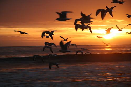 sunset on beach. sunset state each California.