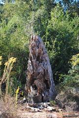 DSC_0005_ (~JENO~) Tags: trees usa tree nature beautiful georgia landscape landscapes weeds weed nikon fantasticnature d3000 photoscape nikond3000 ~jenophotos~