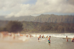 H A N A L E I (* OneLovePhoto.com) Tags: lens hawaii memorial shift homemade kauai tilt pinetrees andyirons hanaleibay paddleout onelovephoto wwwonelovephotocom