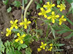 Unknown Flower. (M.R.7) Tags: carmarthenshire dryslwyn mhr welshflickrcymru towyvalley mikerees