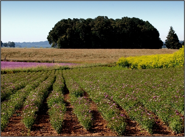 Floral Crops