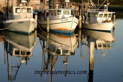 Shrimpboat Trio Reflection buzz