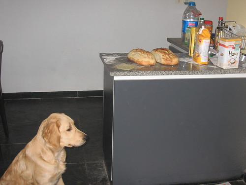 Vienna bread, security included