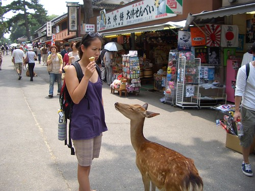 Deer wanting ice cream