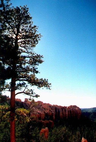 Sun behind the Tree - Bryce Canyon