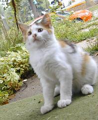 Kitty whompus