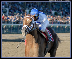 The Lawyer is IN! (Rock and Racehorses) Tags: saratoga rip whitney chestnut woodward velazquez pletcher grade1 racehorses langfuhr lawyerron