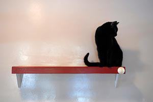 Black cat on a shelf