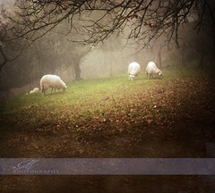 ~ Bucolica (*Marta) Tags: autumn wild italy fall texture nature colors animal italia branch sheep pastoral sheeps textured bucolic bucolica gettyimagesitalyq1 gettyimagesgreece1 gettygreecefamily
