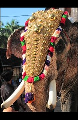 The big elephant... (Trilok Rangan) Tags: light elephant festival temple panchavadyam melam mahout chenda vilakku pazhayannur bhagavathy thidambu niramala panchari
