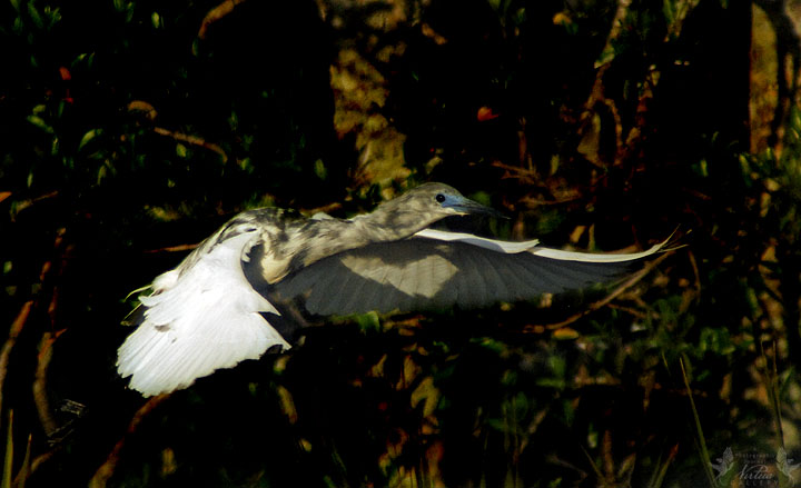 Juvenile flight