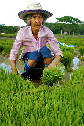Portrait of an Old Woman working in Rice Fields - Philippines, Bagabag