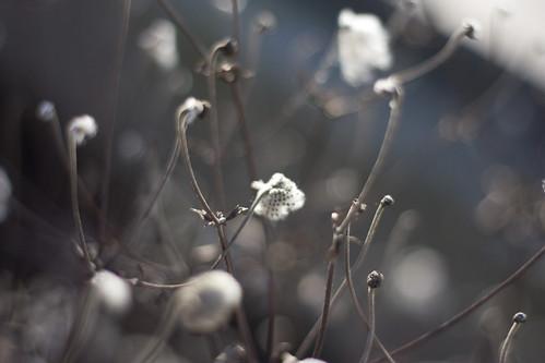 Le faux printemps 2