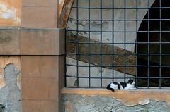 Behind the Palazzo Pitti, Florence (Mirjam75) Tags: italy pet cats pets animal animals cat florence bars italia tuscany firenze boboligardens toscana toscane pitti renaissance itali palazzopitti