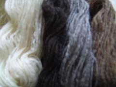 fuzzy shetland