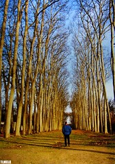 My Way - Chateau de Versailles - Frana (TLMELO) Tags: france film brasil frana bosque versailles tiago filme chateau thiago justdoit ican melo idid impossibleisnothing keepwalking supershot thiagomelo superhearts ysplix excellentphotographerawards flickrelitegroup tlmelo dotheimpossible