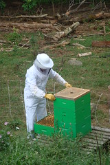 Bee excluder