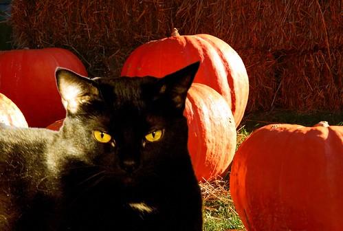 [blackcat]