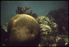 Coral and Sea Life in the John Pennekamp Coral...