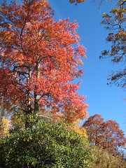 Bright trees near the mansion
