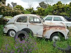 abandoned rusty wreck peugeot 203