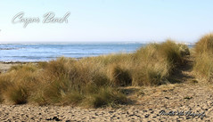 Caspar Beach (Michellekiba) Tags: park panorama creek state sonoma roadtrip mendocino redwood prairie fortbragg californiacoast lostcoast hiway1 compositephotos californiaphotographer womeninphotography michellekibaphotography canond50user