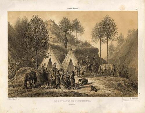 012-Los pinares de Nahulbuta-Atlas de la historia física y política de Chile-1854-Claudio Gay